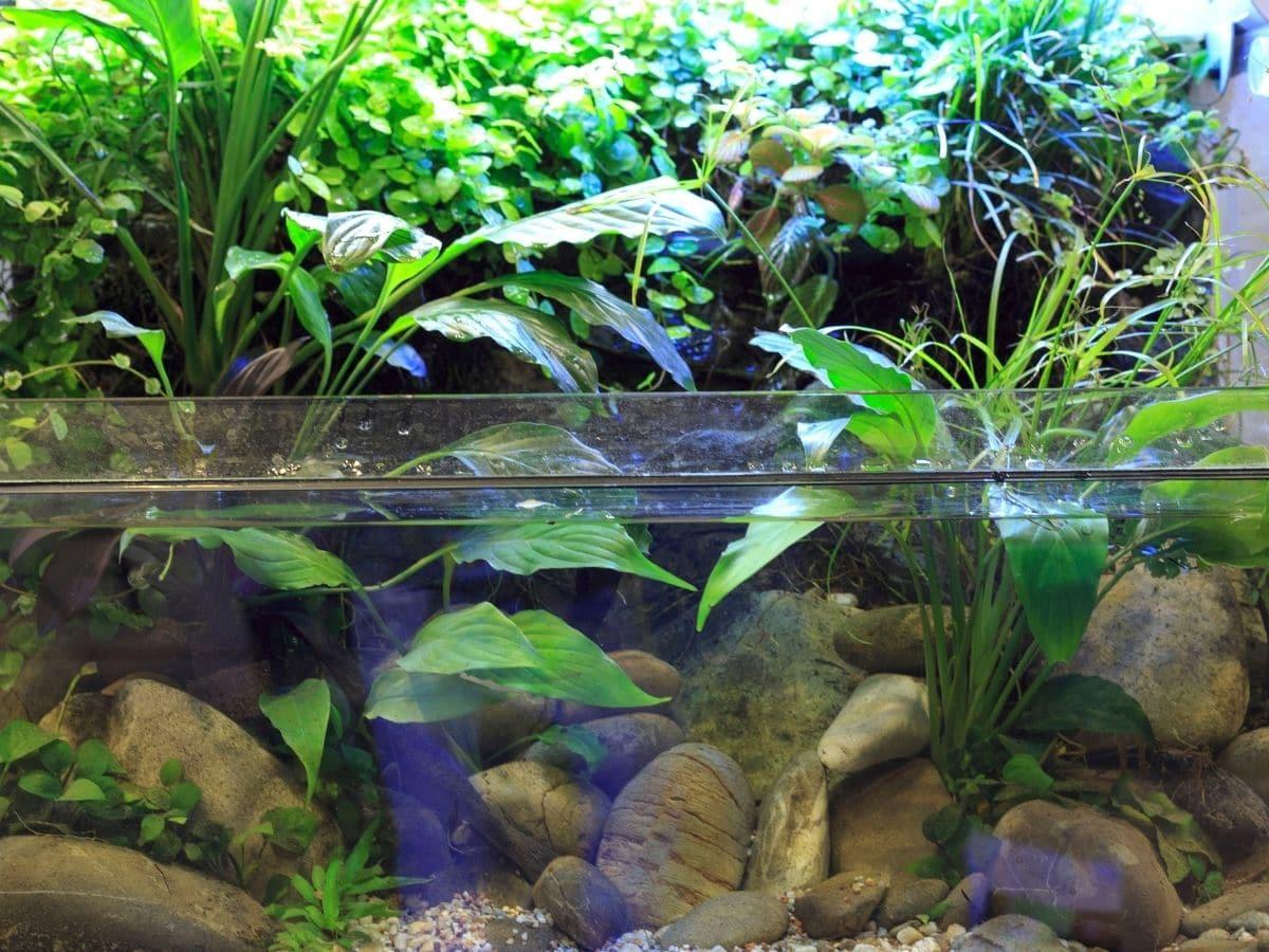 An aquarium full of plants