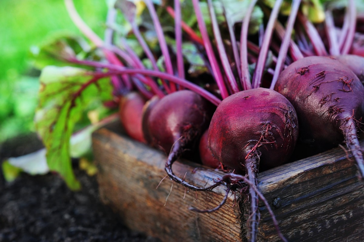 Picked Beets