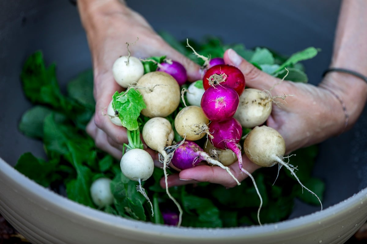 Radishes are some of the best plants to grow in a VegTrug