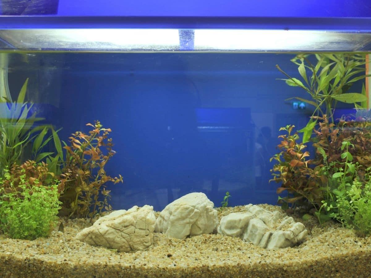 Substrate in an aquarium