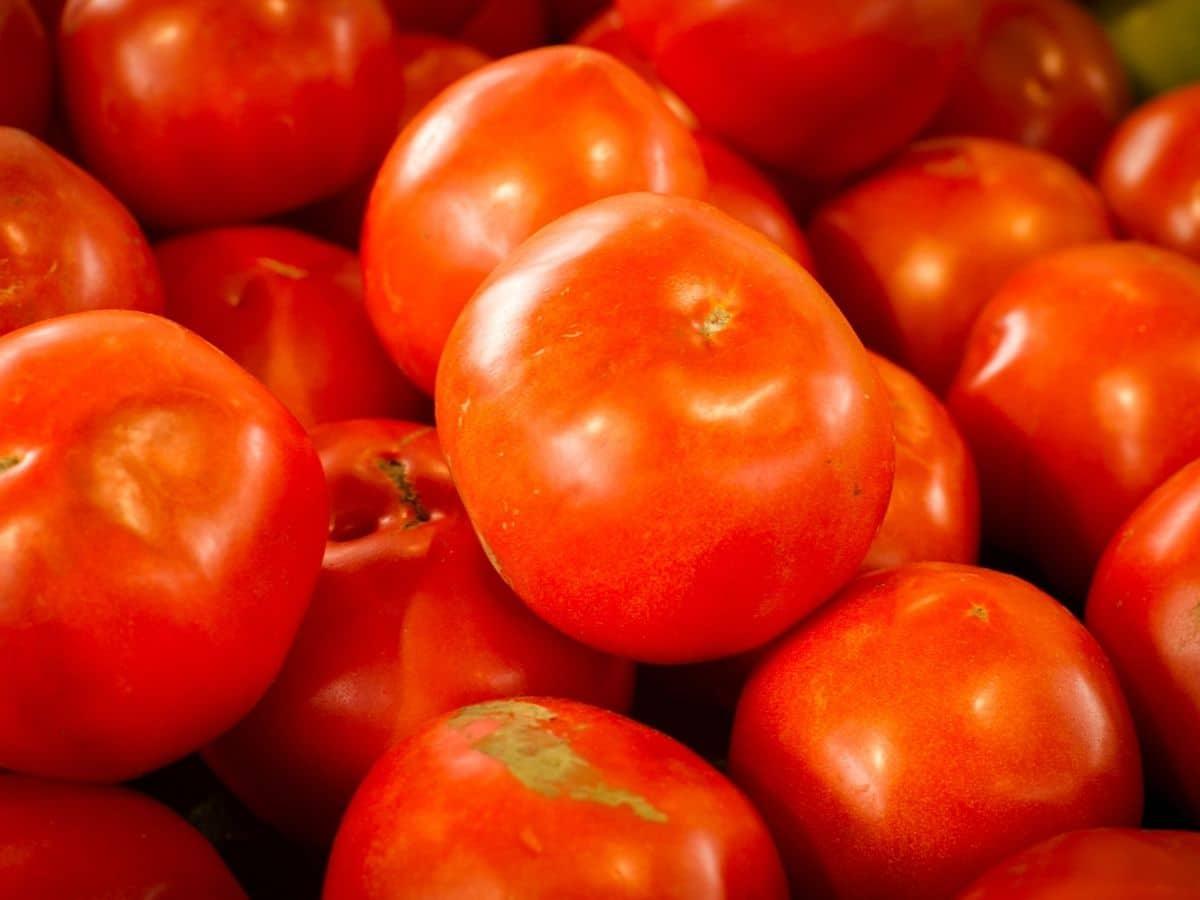 Arkansas Traveler tomatoes