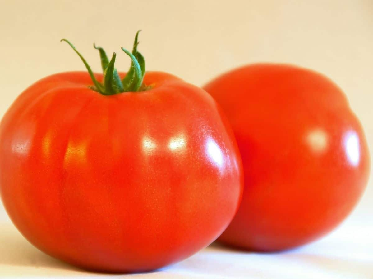 Bonny Best Tomatoes