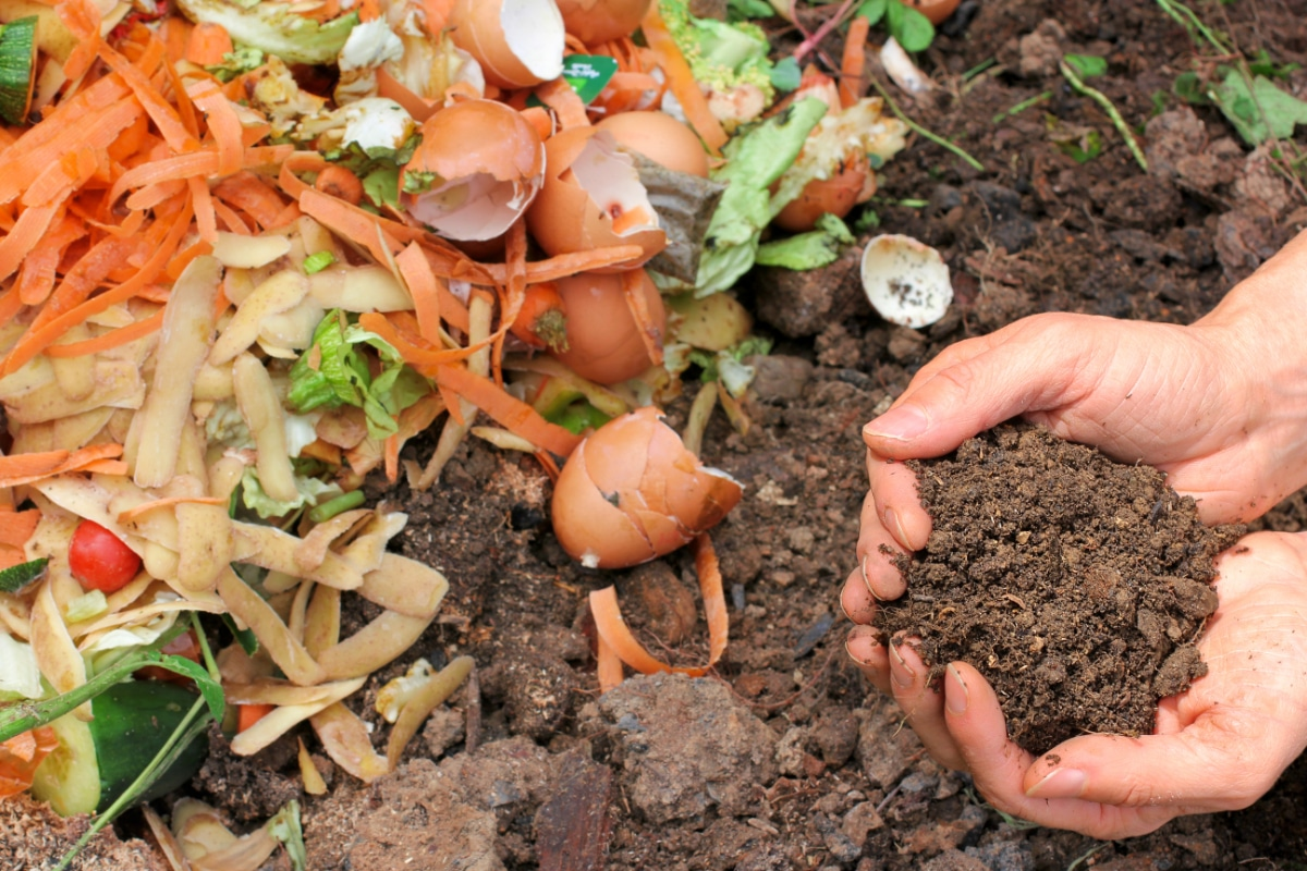Eggshell with Compost