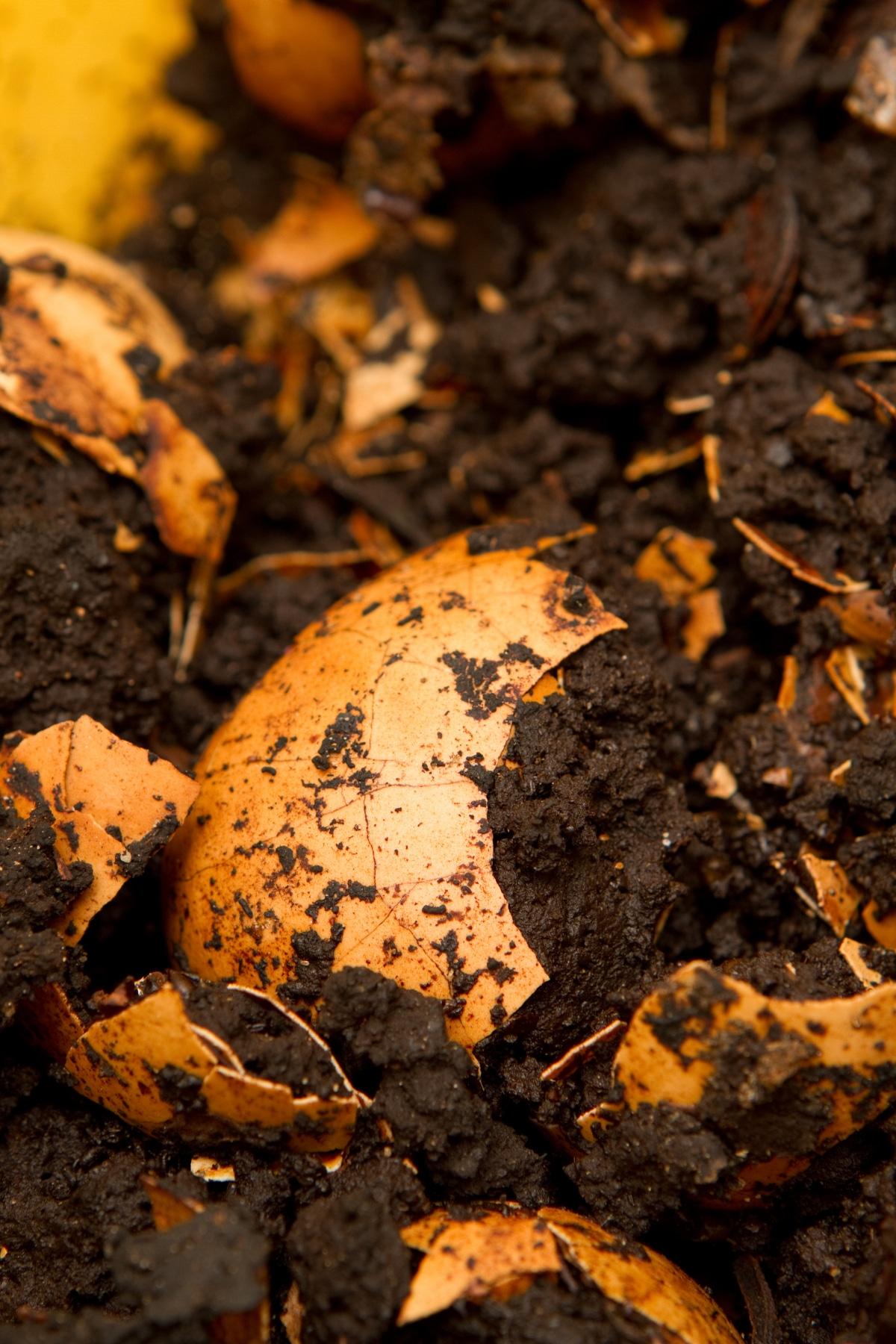 Garden Soil Egg Shell pH
