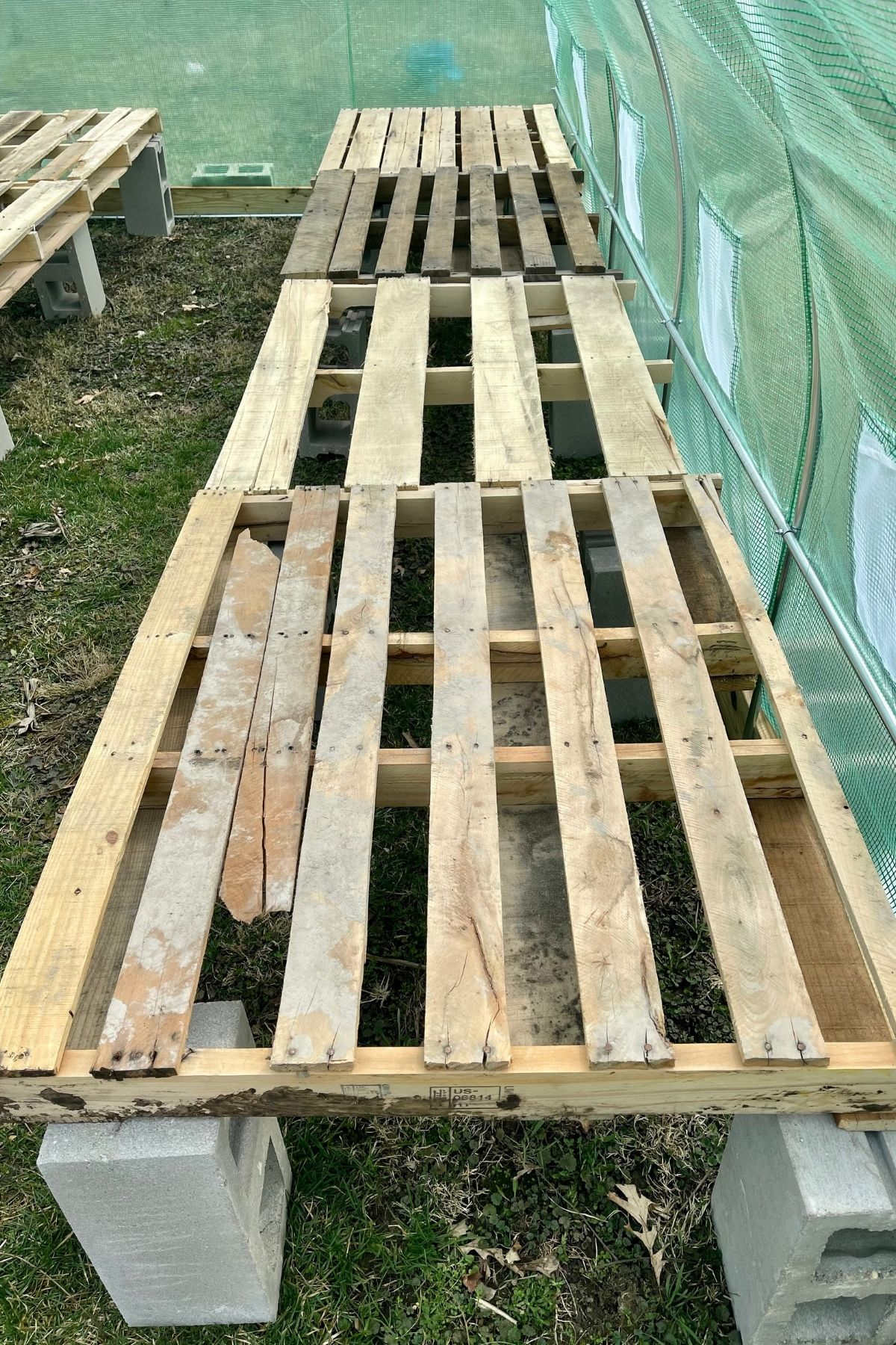 Long narrow pallet table in greenhouse