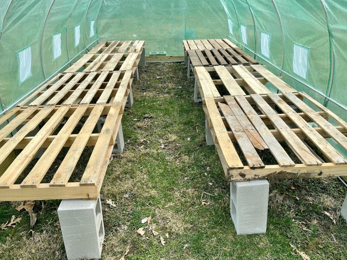 Pallet bench in greenhouse