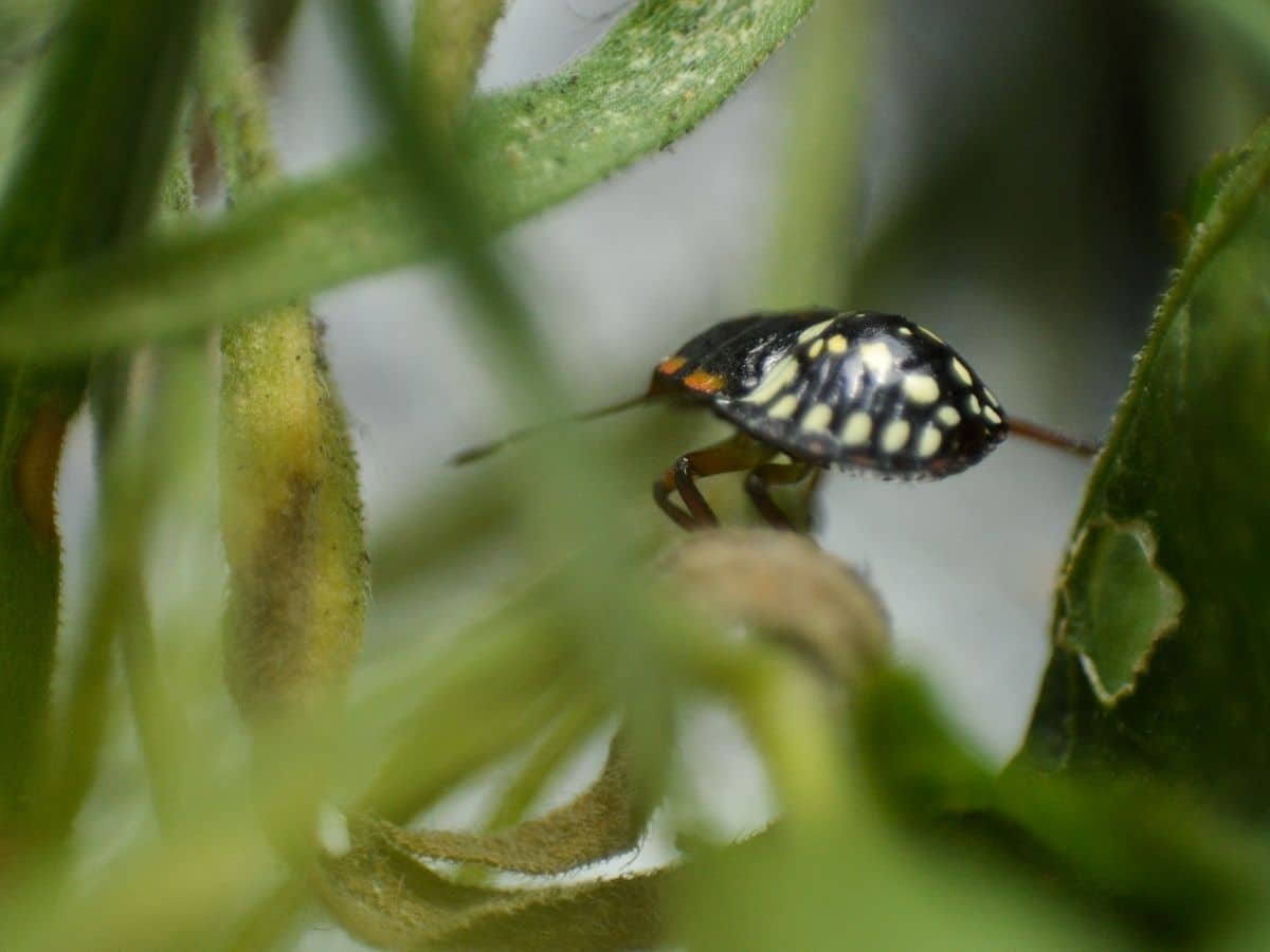 Bug in the garden