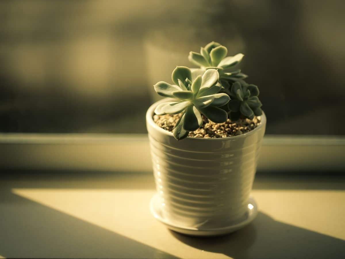Plant in the sun