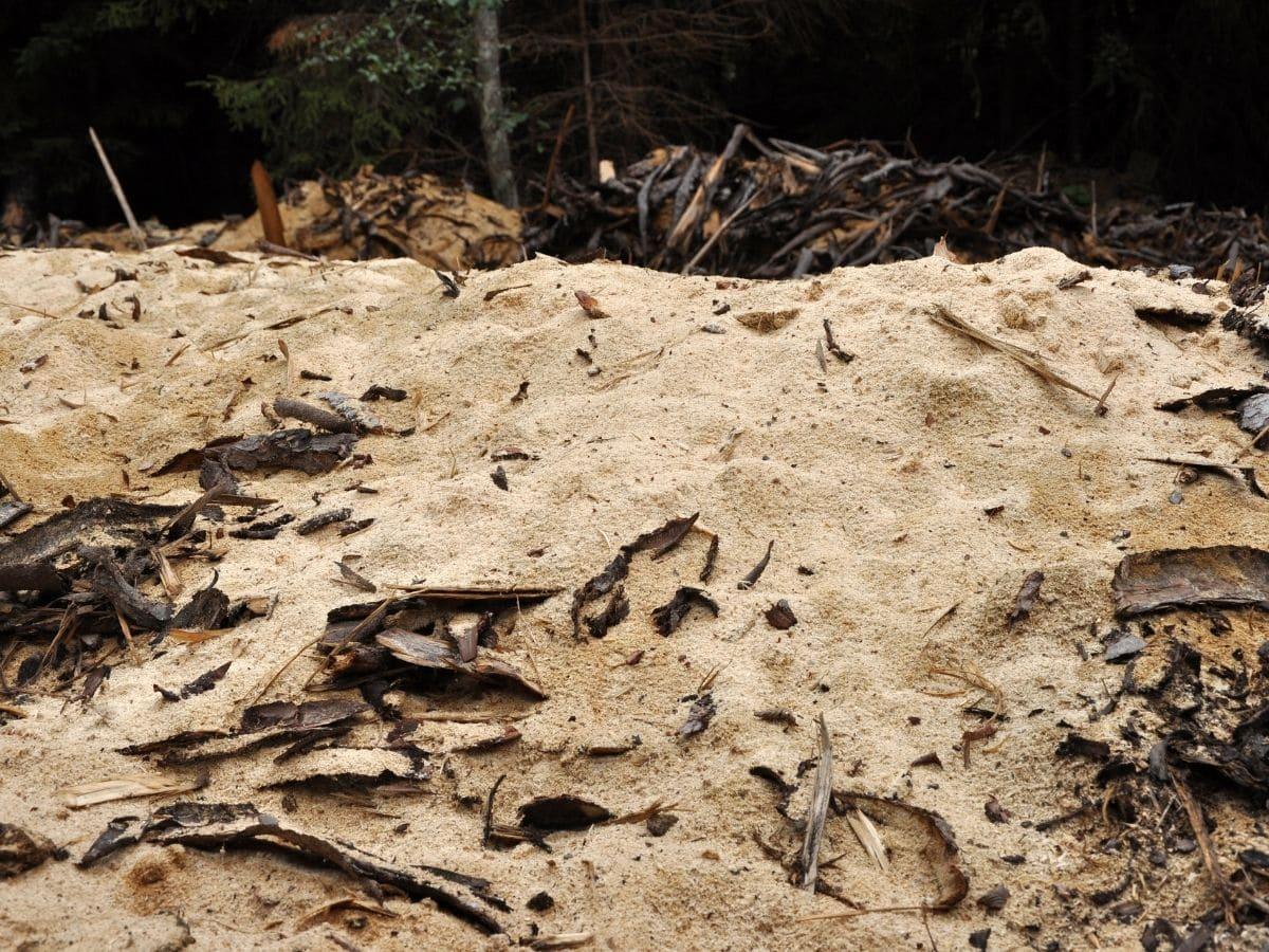 Sawdust on the Ground
