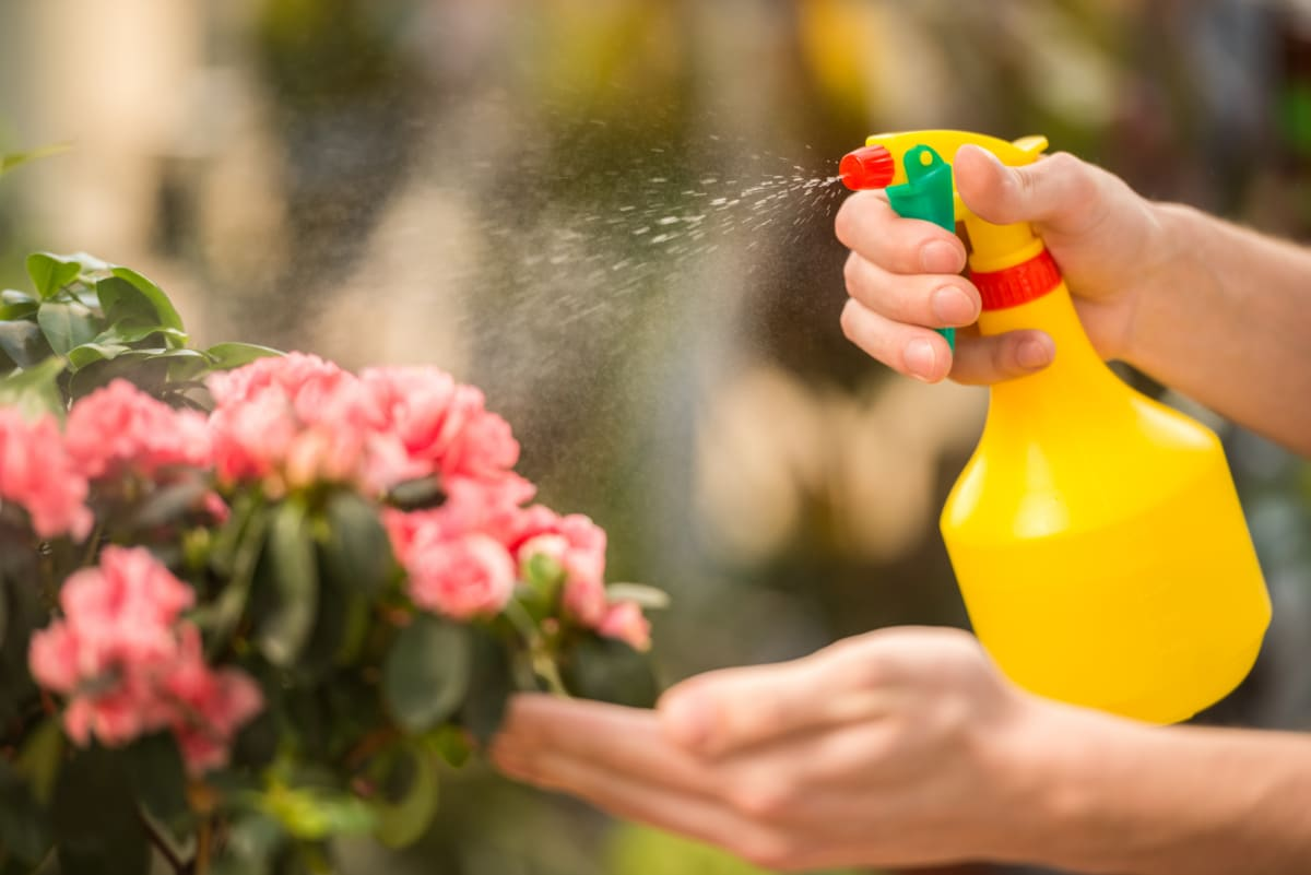 Spraying the garden