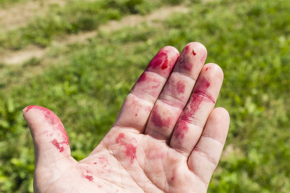 Stained Fingers