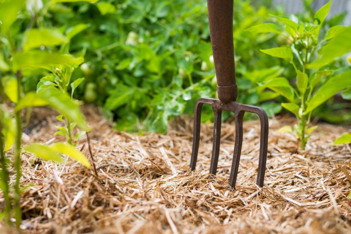 Straw mulch more