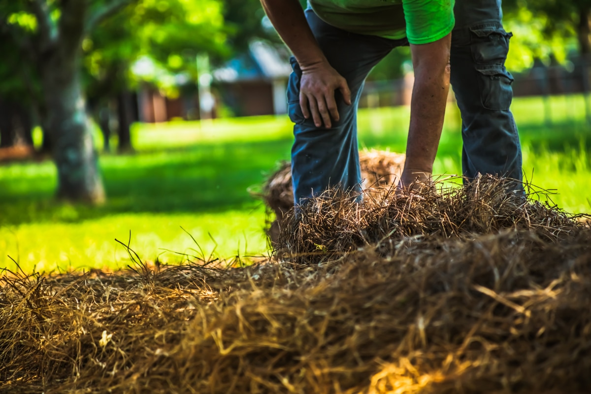 Creating a straw bale cold frame