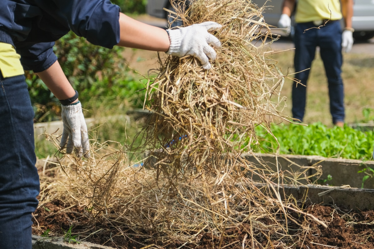Straw in Compost