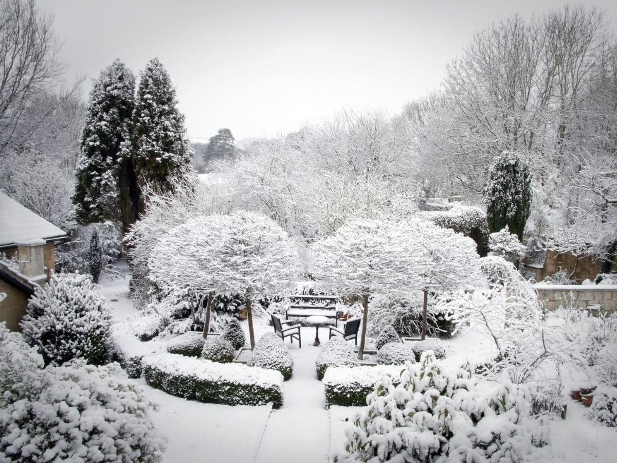 Winter Snow Garden