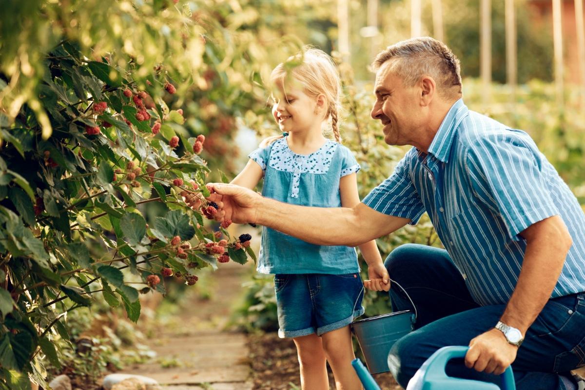 Family picking Blackberries