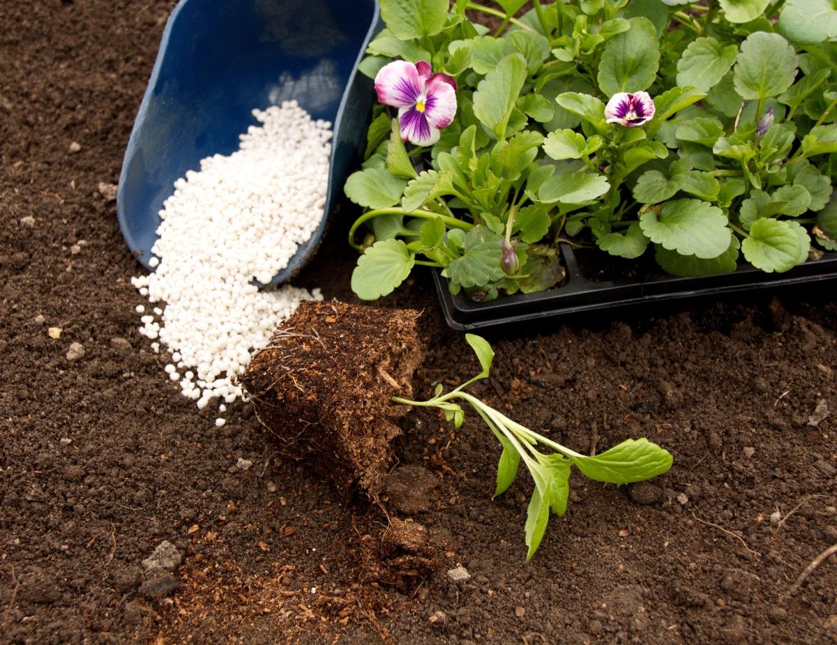 Fertilizing Pansies