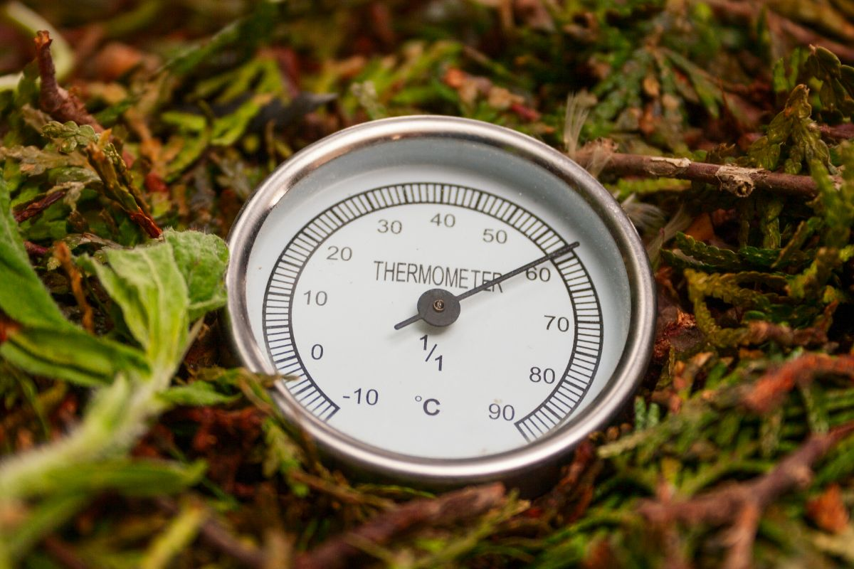 Monitoring compost temperature with a thermometer.