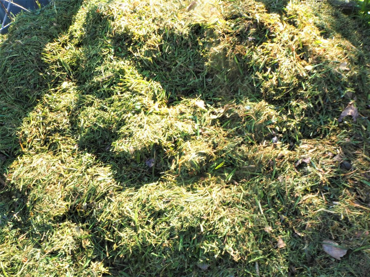 Grass clippings added to compost.