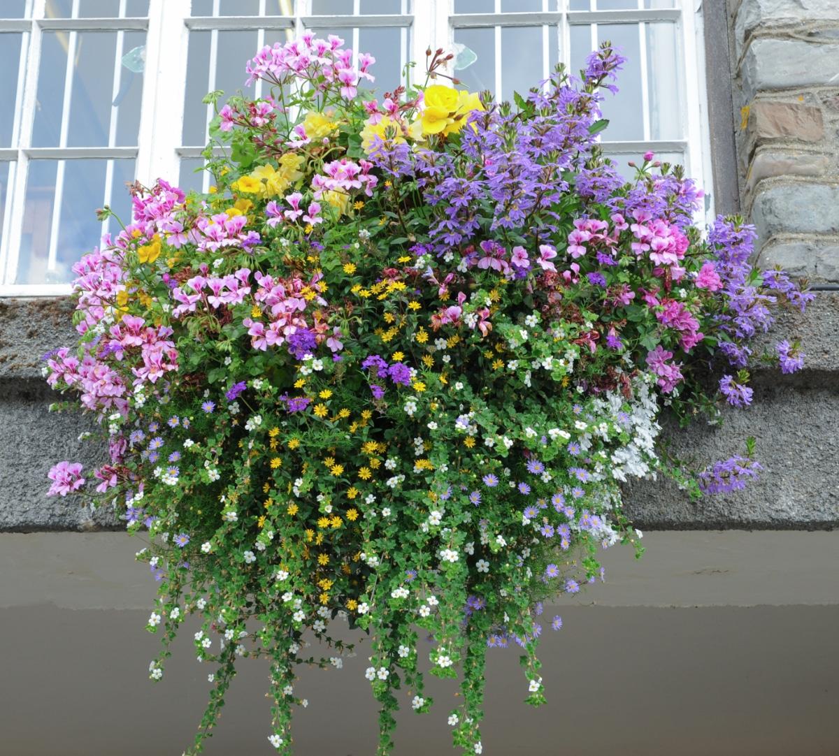 Fancy Hanging Basket