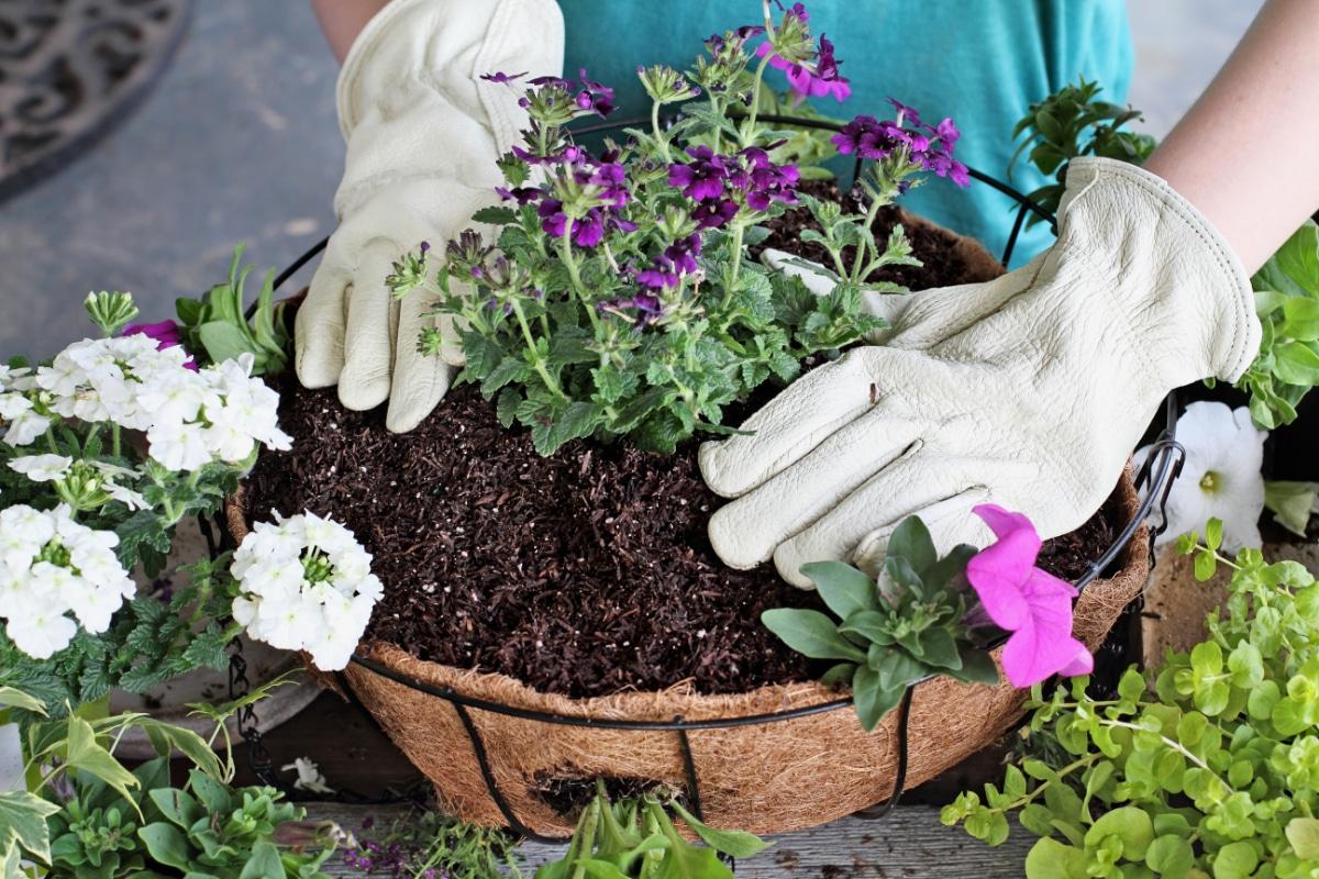 Hanging Basket Soil
