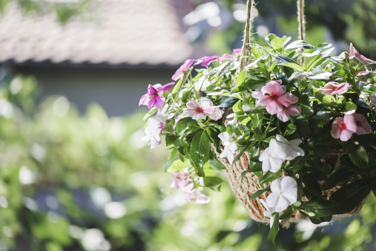 Hanging Basket in the Sun