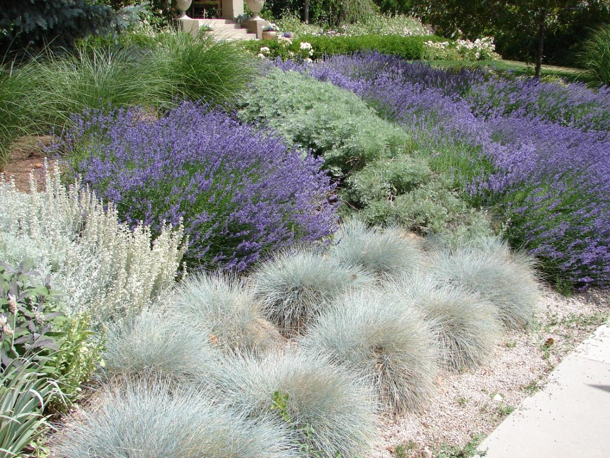 Lavender Space