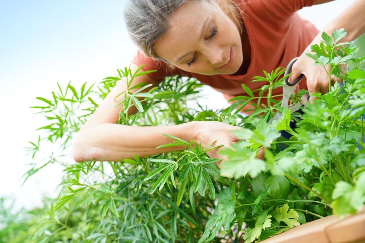 Picking Herbs