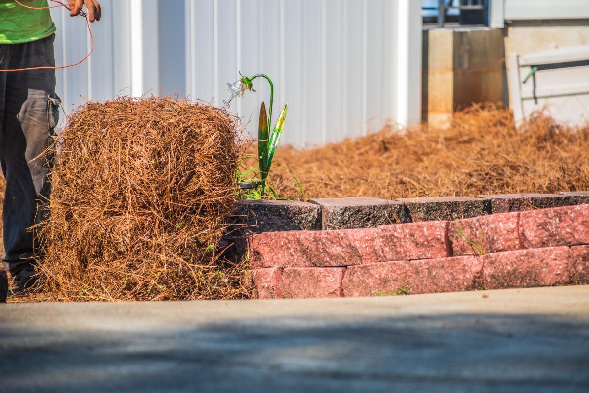 Pine Needle Covering Plants