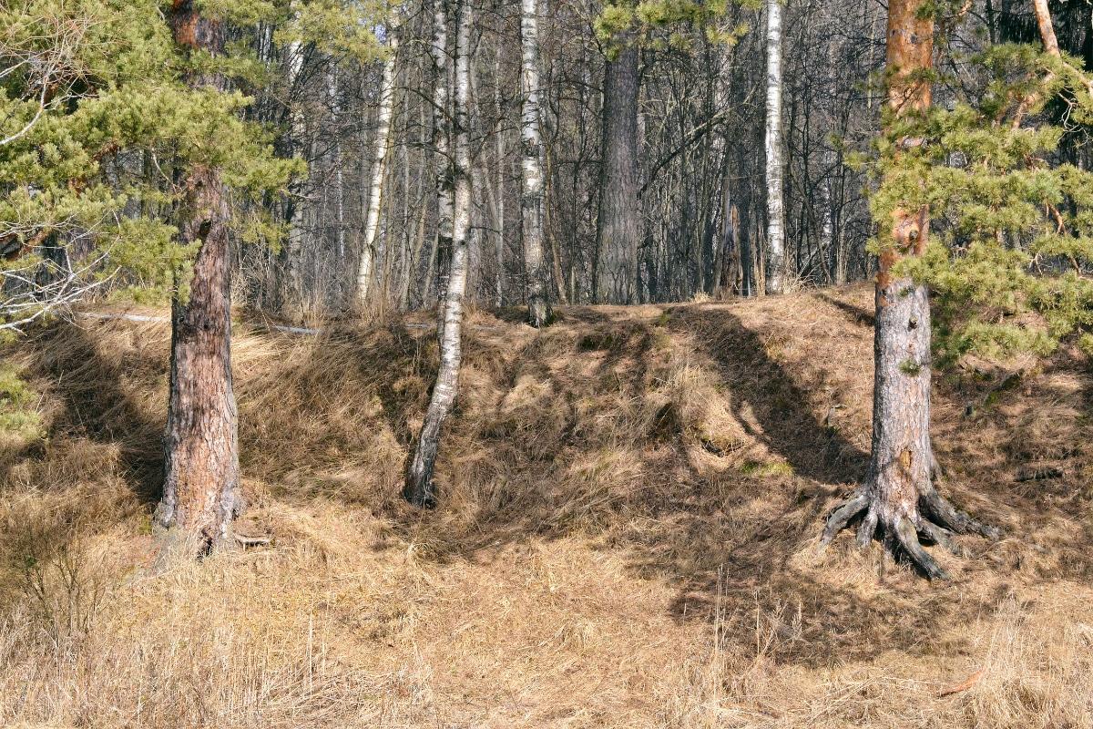 Pine Needle Erosion Control