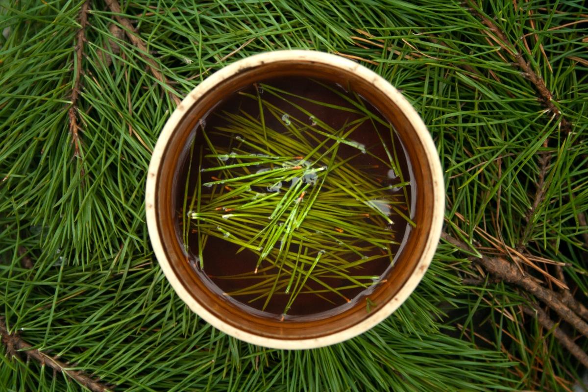 Soaking Pine Needles