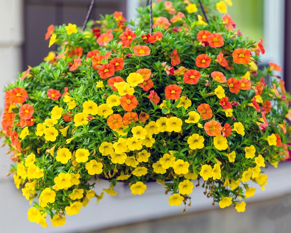 Yellow and Orange Hanging Basket