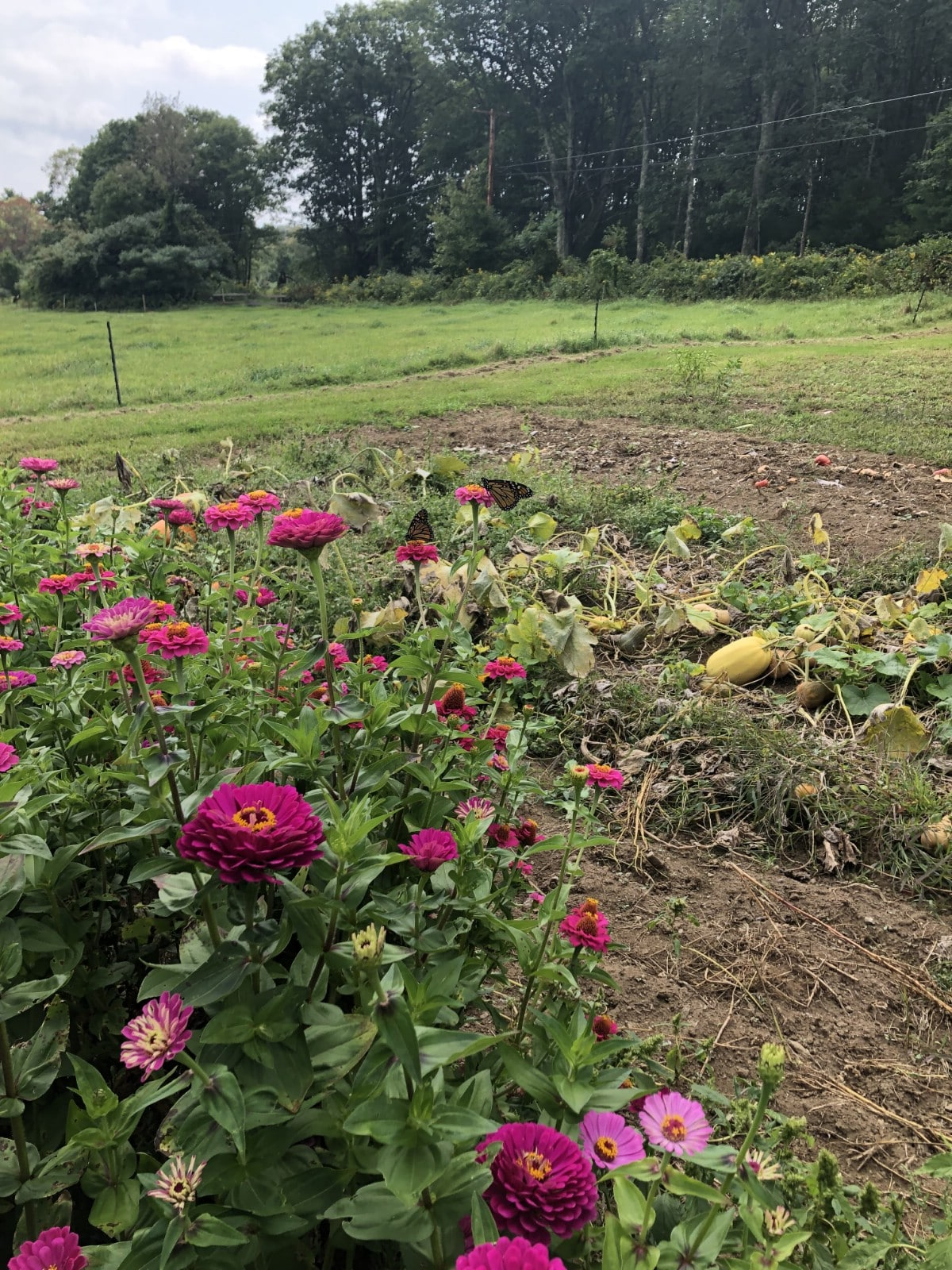row of cut flowers next to squash