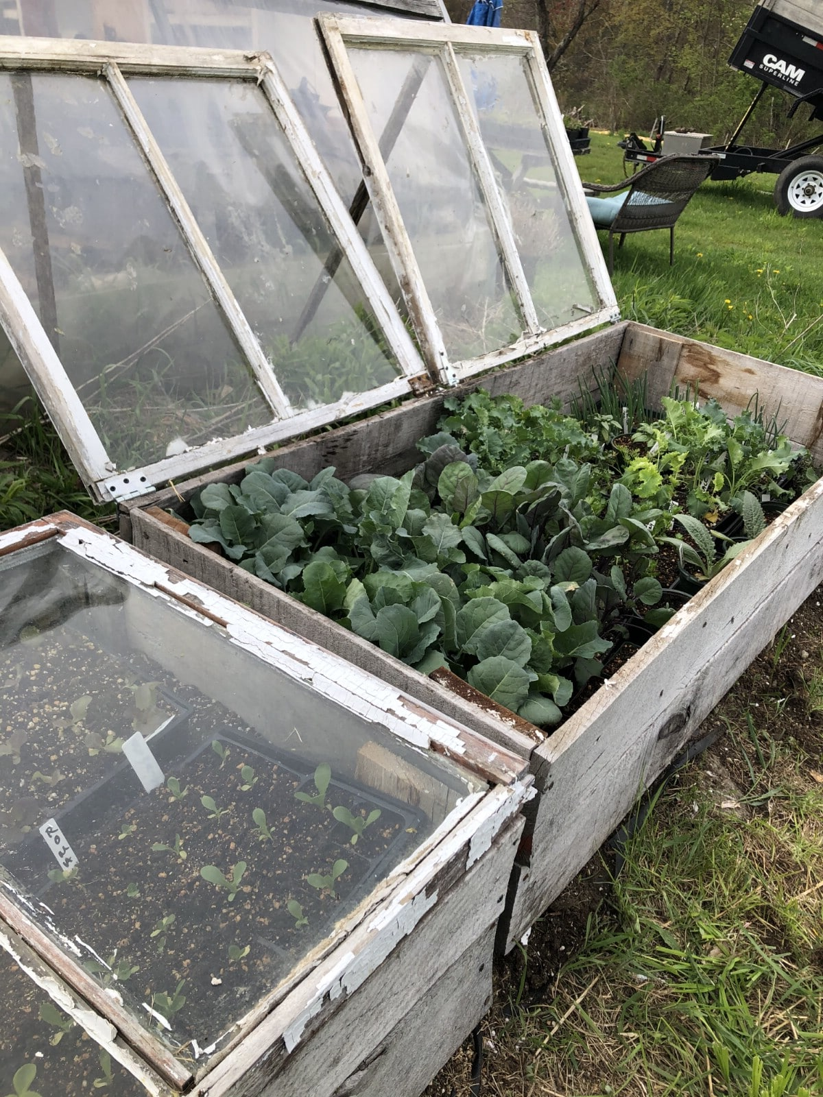 cold frame from old windows and boards