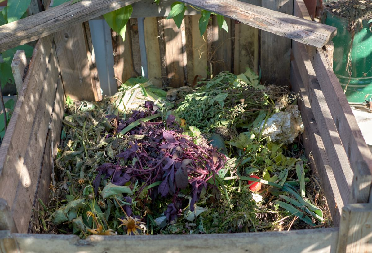 Wooden compost bin half full.