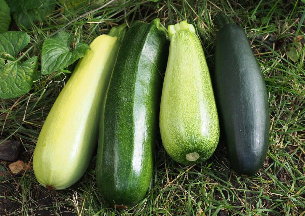Different varieties of zucchinis