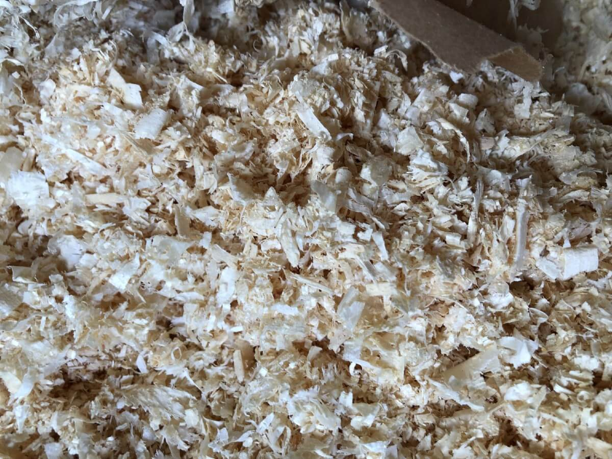 fresh pine shavings