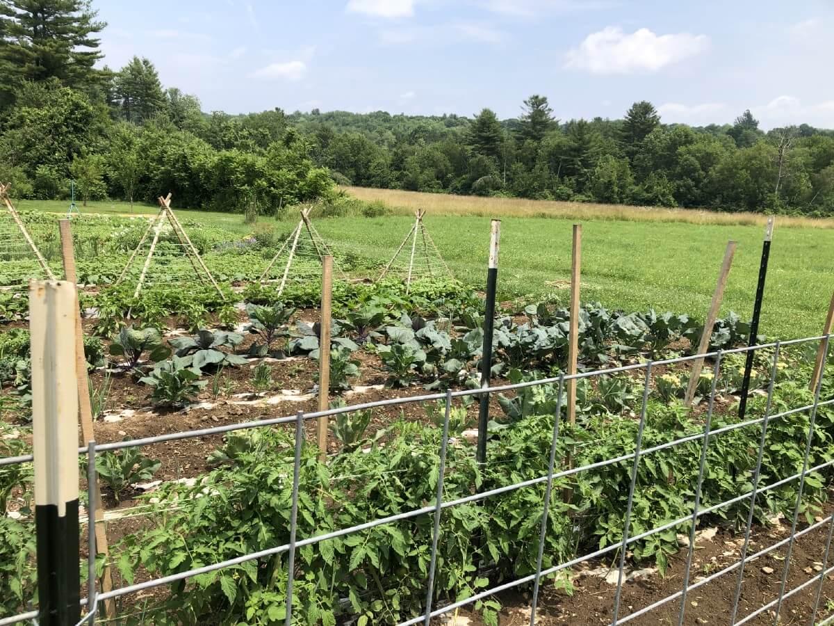 garden fence trellises
