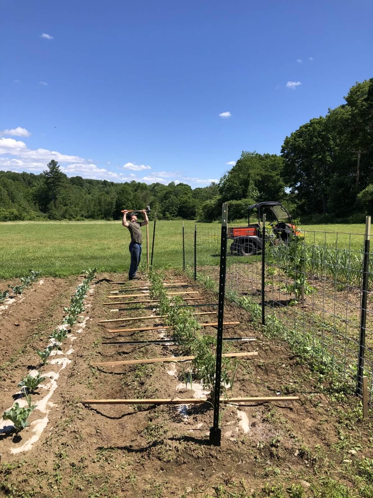 basket weave tomato fence