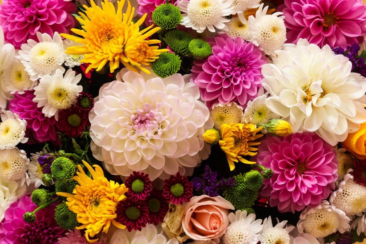 chrysanthemums in a flower arrangement