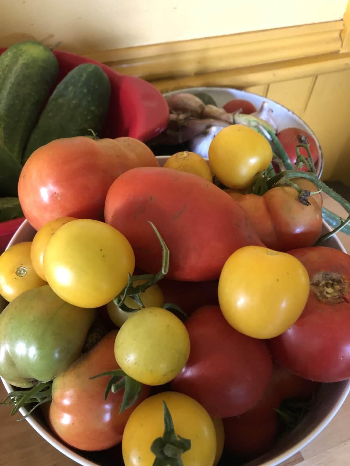 harvested garden produce