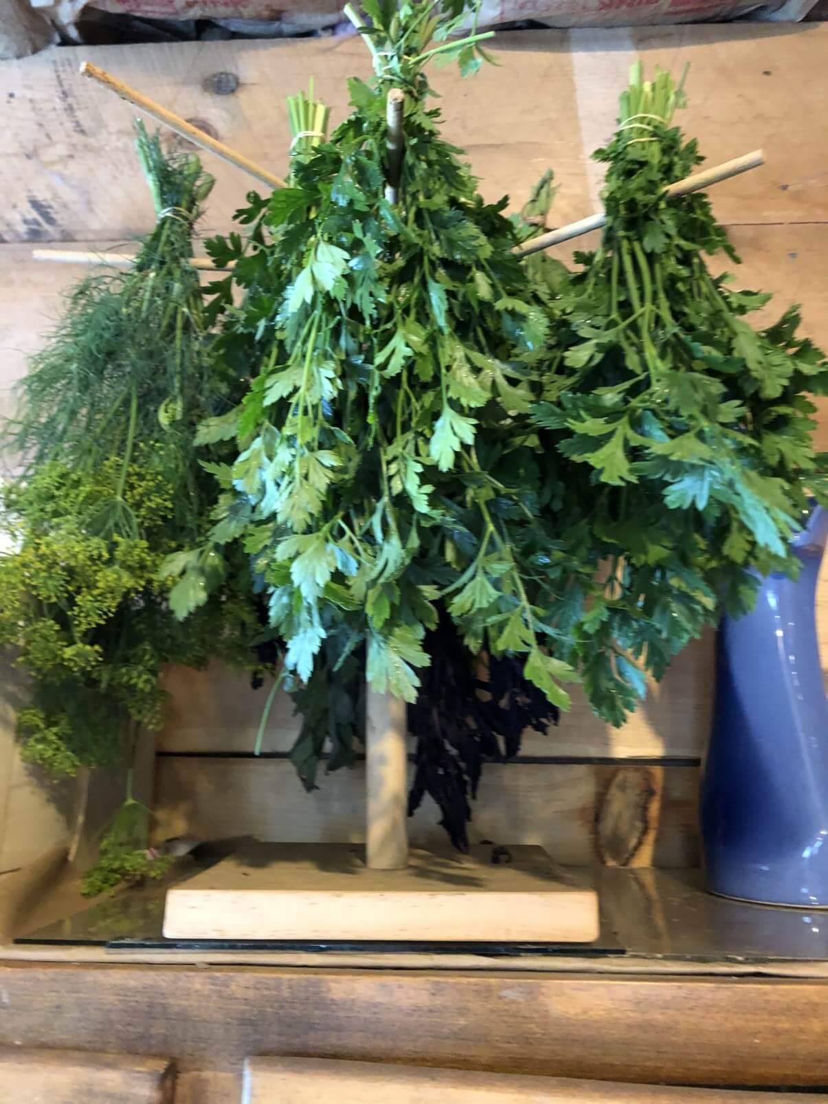 fresh herbs bundled and drying on pasta rack