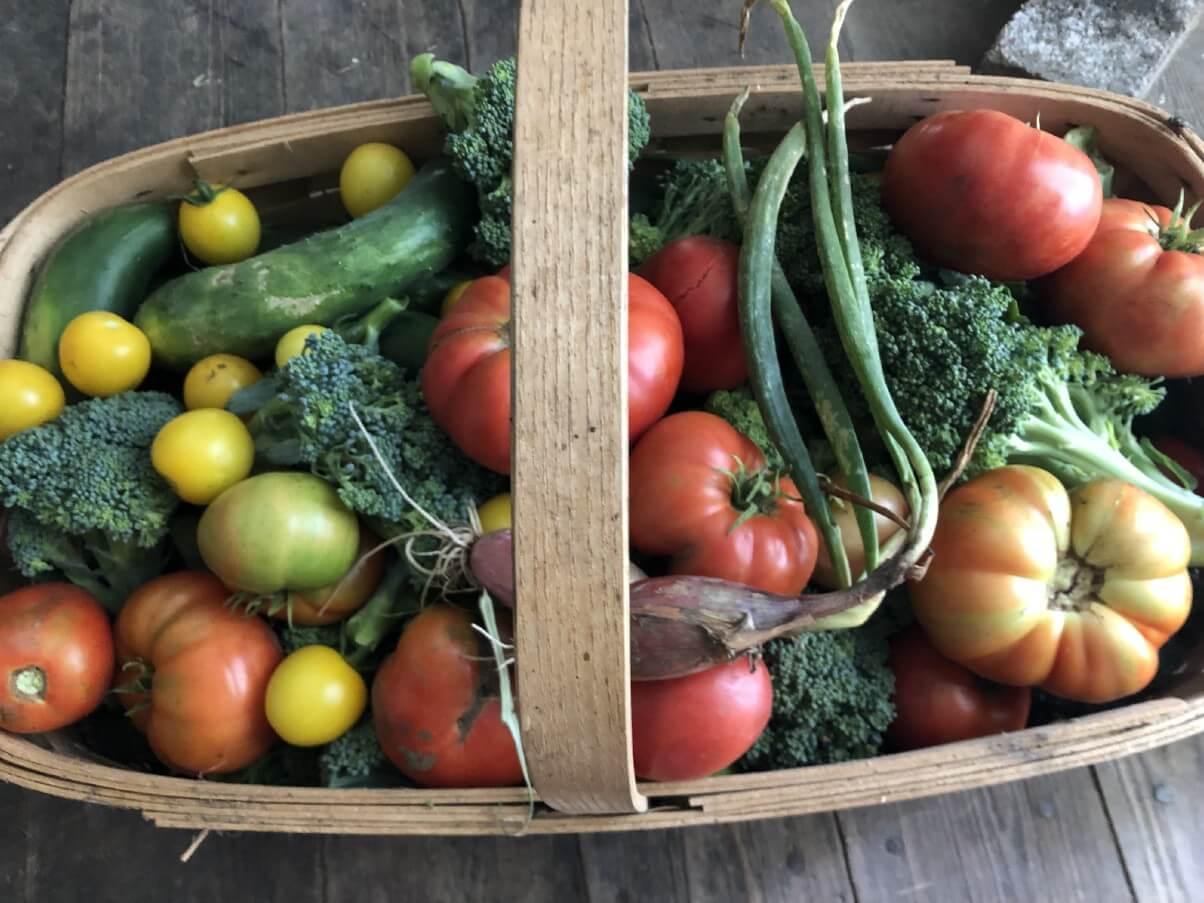 basket of fresh harvested garden produce