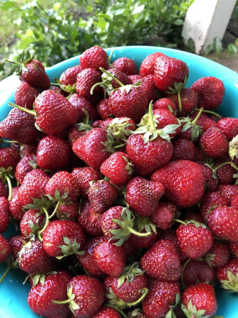 fresh strawberries in colander