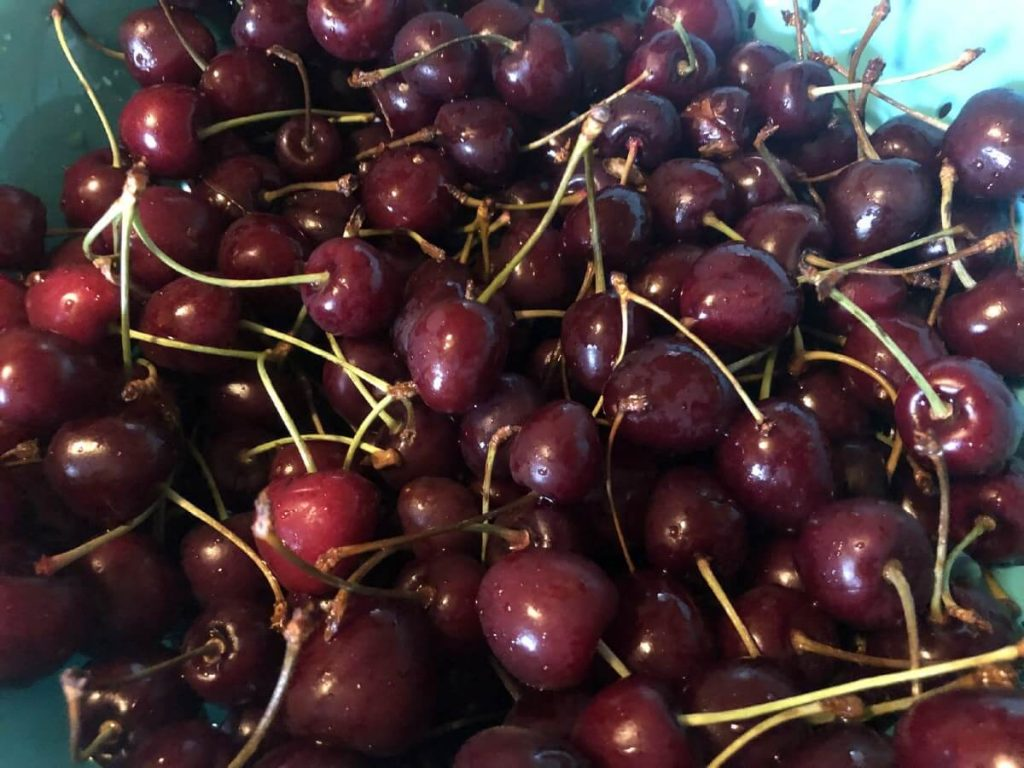 fresh cherries in a bowl to be prepped for fruit leather