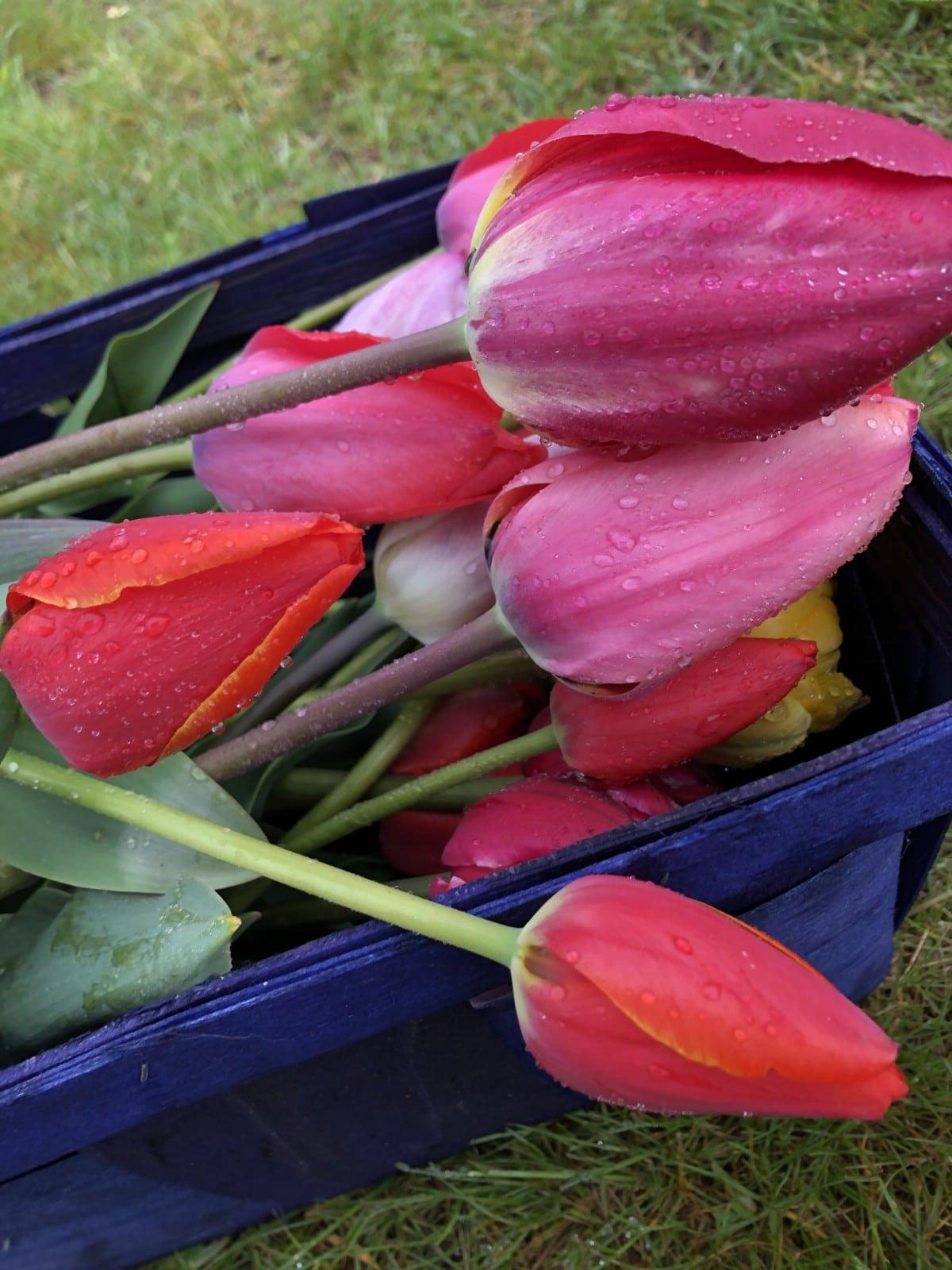 cut tulips in blue basket