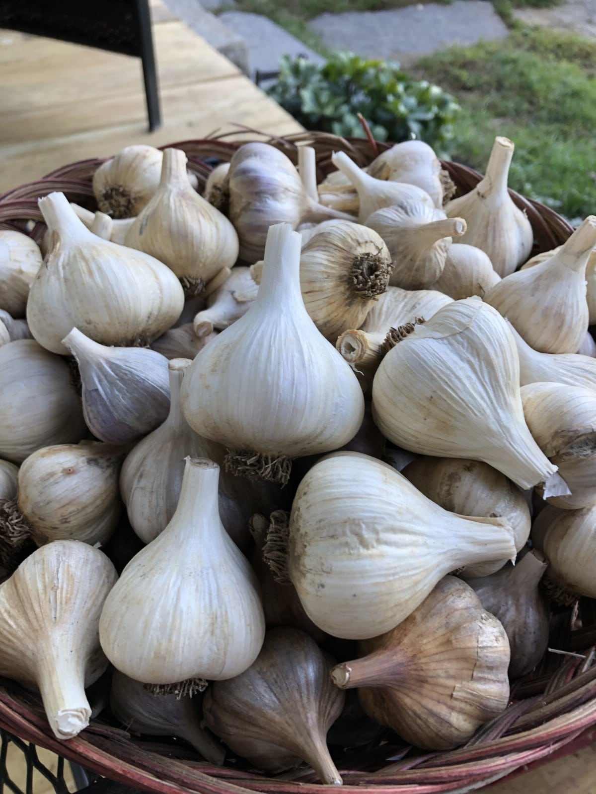 trimmed and stores garlic bulbs