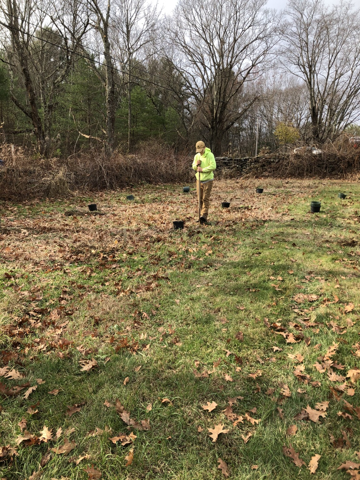 planting berry bushes in the fall